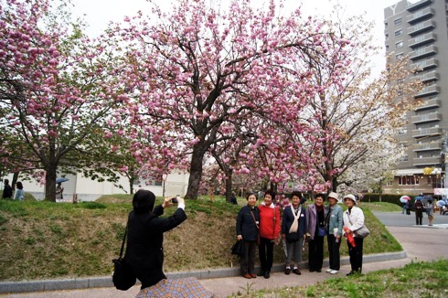 広島 造幣局の桜の通り抜け(花のまわりみち)2012 画像4