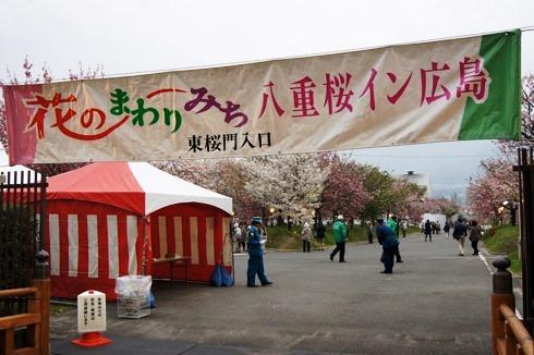 広島 造幣局の桜の通り抜け(花のまわりみち)2012 画像6