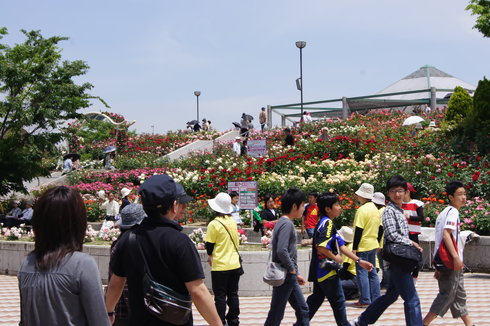 福山ばら祭2012 緑町公園の様子1