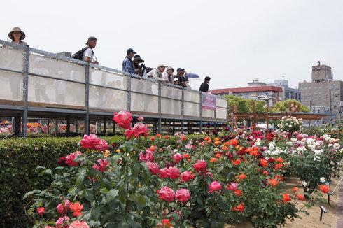 福山ばら祭2012 ばら公園の様子10