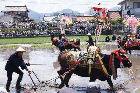 壬生の花田植え 飾り牛の画像26