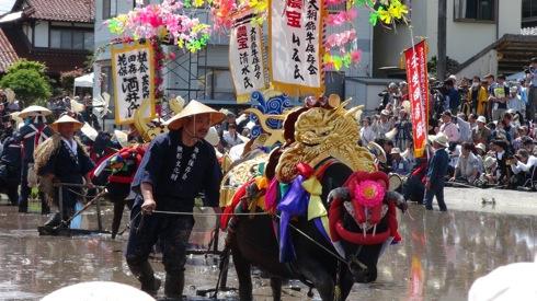 壬生の花田植え 飾り牛の画像8