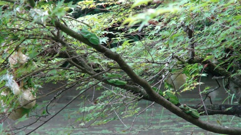 広島 安芸太田町 吉水園の画像 11