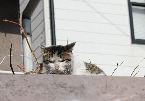 鞆の浦の 猫石と、ノラ猫たち