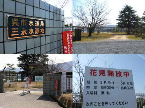 三永水源地 開放!藤棚や桜が美しい 東広島のお花見スポット