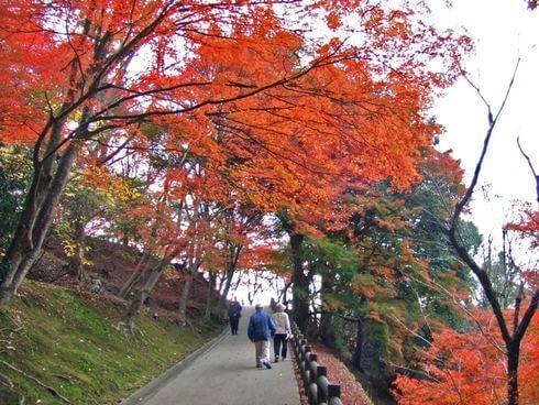 三次市 尾関山公園 の紅葉写真 10