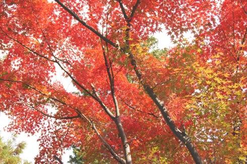 半べえ庭園 の紅葉の様子 画像