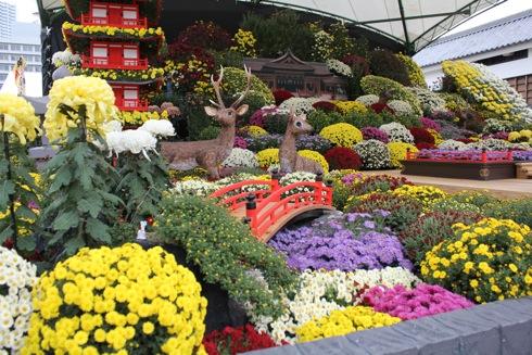 広島城 大菊花展 2012 メインの花壇の画像