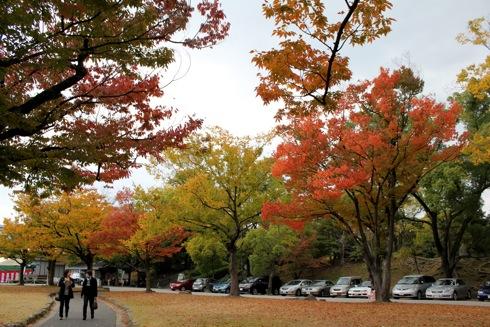 広島護国神社 紅葉