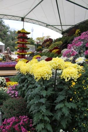 広島城 大菊花展 特作花壇の画像