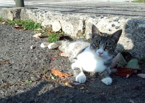 広島 黄金山のネコたち2