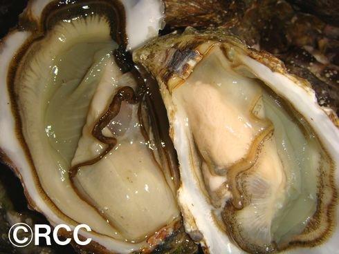 緑色の牡蠣 フランス