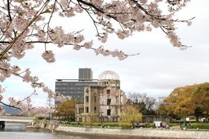 広島 平和公園の桜 画像