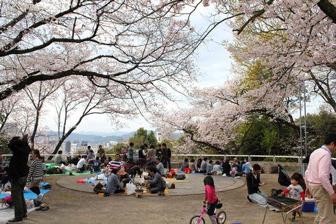 比治山公園の 桜が満開に!お花見BBQもできる
