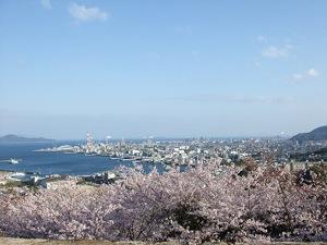 亀居公園 桜の画像
