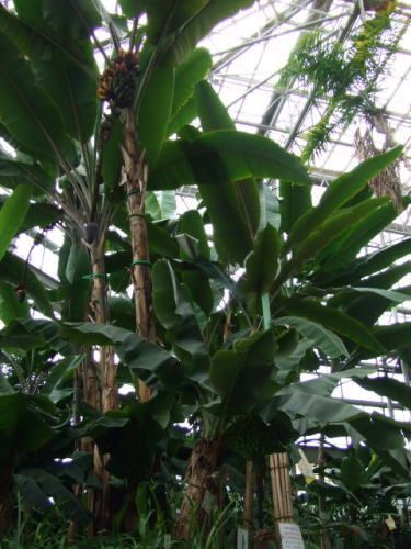 広島市植物公園 大温室の中の様子