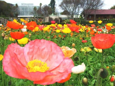 広島市植物公園 は山1つ分?どの季節も楽しめるスポット