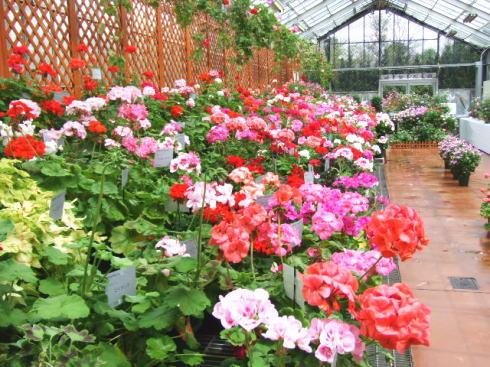 広島市植物公園 いろいろな温室