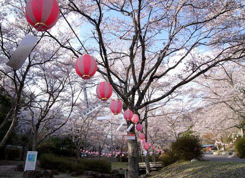 土師ダムの桜 のどごえ公園 画像2