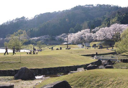 土師ダムの桜と のどごえ公園