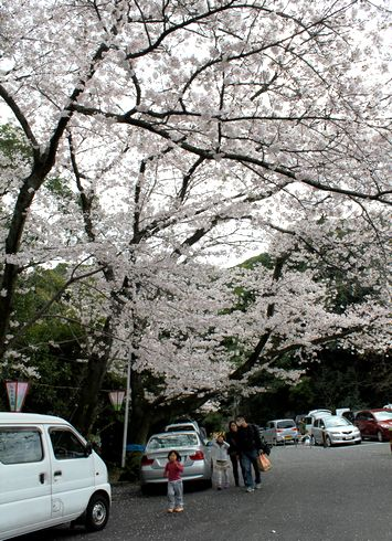 比治山公園の桜にはしゃぐ子ども達