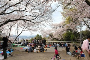 比治山公園の桜の画像