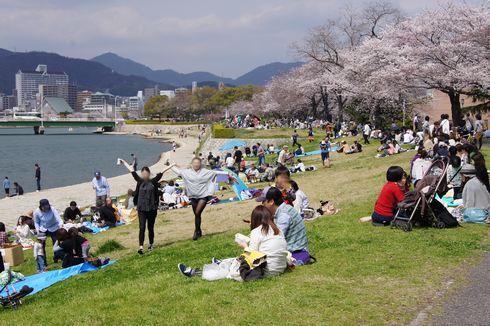 広島市 川沿いの桜 画像4