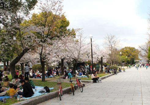広島市 平和公園の桜 画像4
