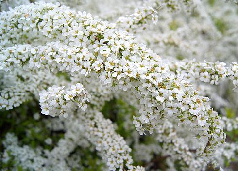 鏡山公園 に咲いていた花
