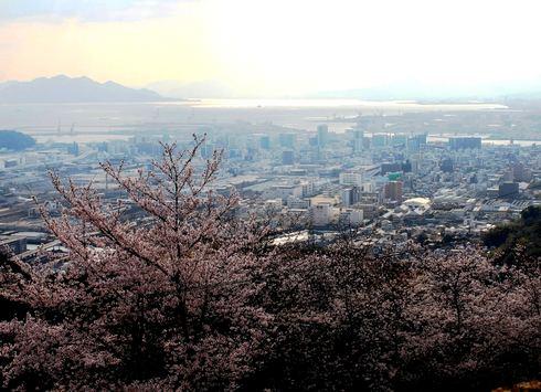 黄金山 山頂展望台からの街と桜の様子