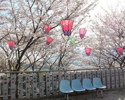 廿日市市 大田神社の桜の写真4