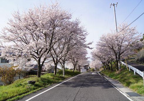 廿日市市 大田神社への道