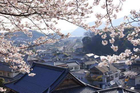 廿日市市 大田神社 近くの桜の広場