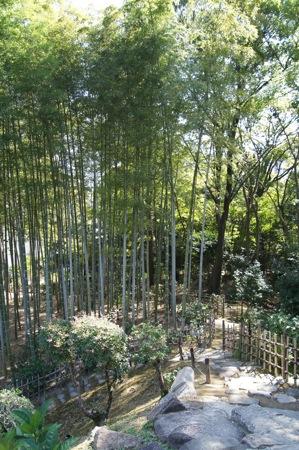 縮景園の中にある竹林