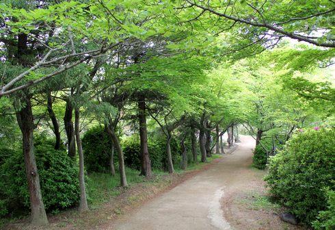 つつじヶ丘と散歩道