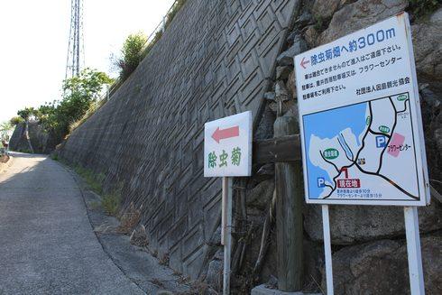 因島 除虫菊畑への看板
