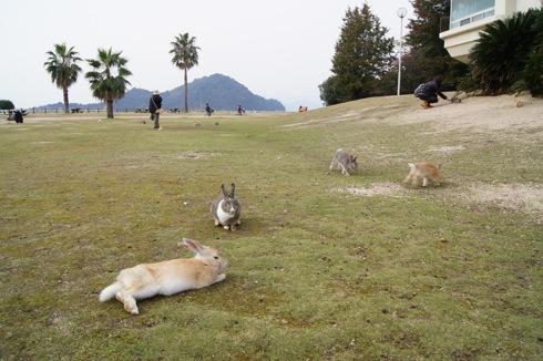 大久野島 うさぎの芝生広場