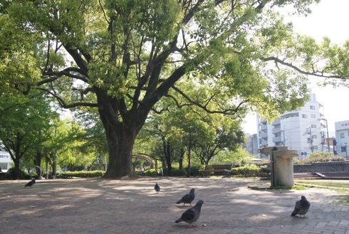 呉市 中央公園の画像3