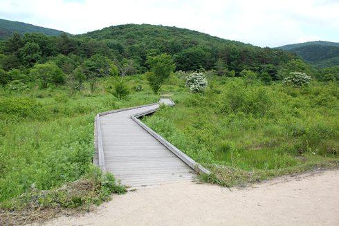 広島 八幡湿原の木道1