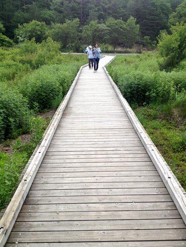 広島 八幡湿原の木道2