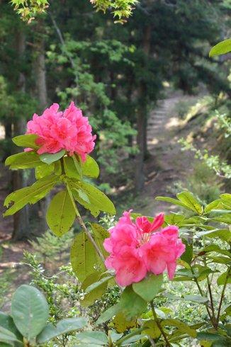 佐伯国際アーチェリーランド フィールドコース 綺麗な花も