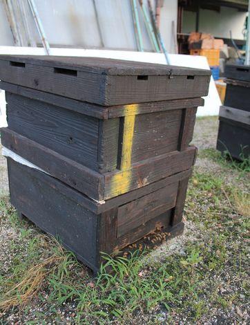 光源寺養蜂園 ミツバチの箱