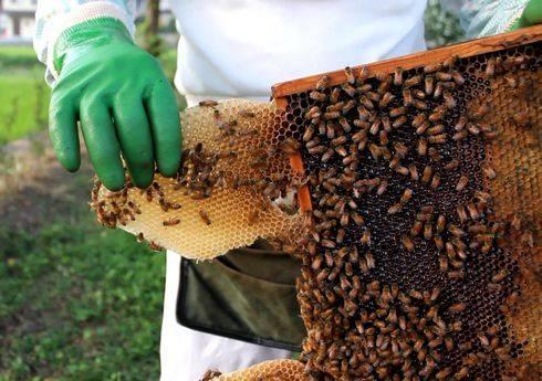 光源寺養蜂園でミツバチの巣見学