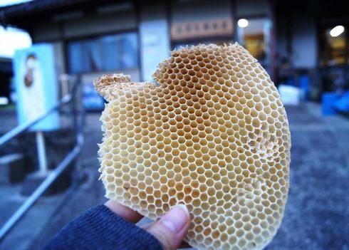 光源寺養蜂園で、ミツバチの網目を貰う