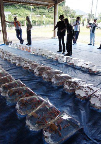 佐伯錦鯉市場 集まった鯉たち