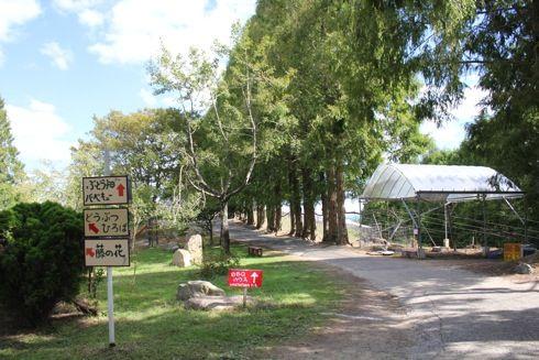 平田観光農園 広い園内