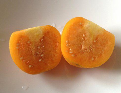 ほおずきの実、見た目はプチトマトのよう