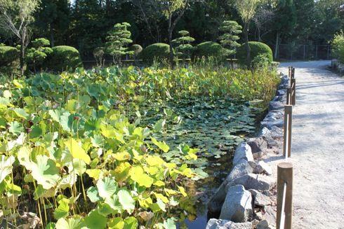 湧永庭園 蓮の池