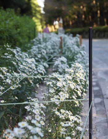 湧永庭園 庭園の花3