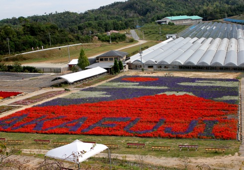 世羅ゆり園で花絵「赤富士」サルビア・ケイトウで描く